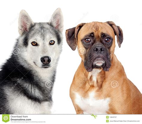 two dogs two dogs of different breeds stock image image 14843707