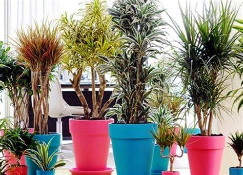 piante per appartamento piante da appartamento dichio vivai garden
