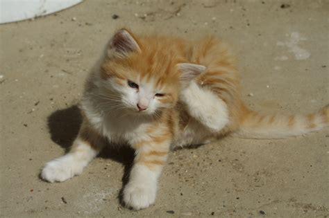 Imagenes Tiernas Gatos | imagenes tiernas y curiosas de gatos imagenes frases