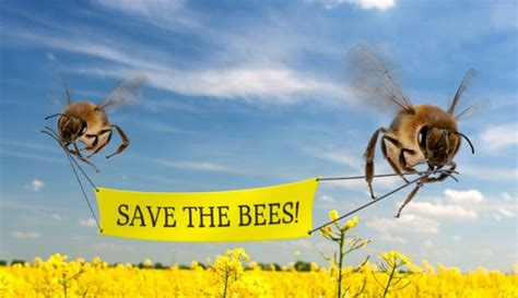 Neonicotinoids Why Bee Extinction Would Mean The End Of Humanity