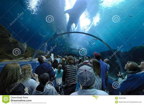 Georgia Aquarium Gift Card - georgia aquarium editorial photo image 18487206