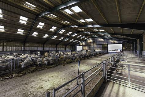 sheep housing sheep sheds  buildings