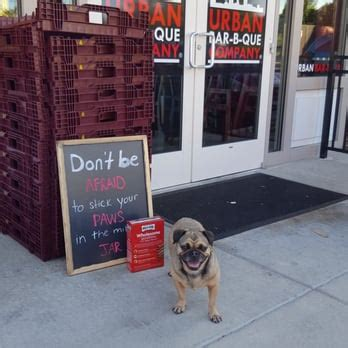 pug a lot of water d s reviews glen burnie yelp