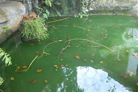 cara membuat filter kolam ikan koi mudah dan sederhana cara membuat filter kolam ikan mudah dan cepat lengkap