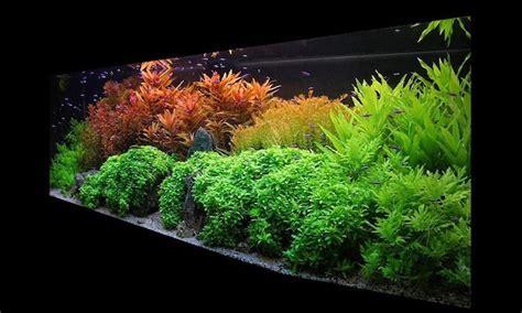 plante aquatique jetez vous  leau en