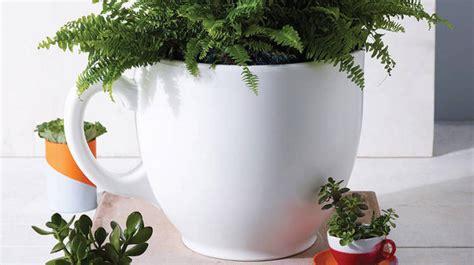 memilih tanaman indoor  tepat rumah