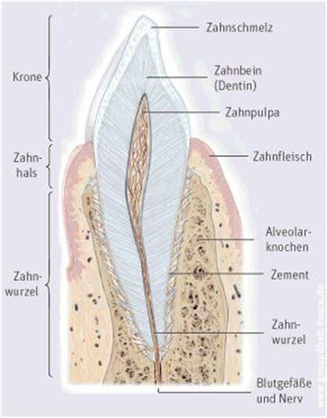 Beschriftung Zahn by Merkblatt Zahnkaries