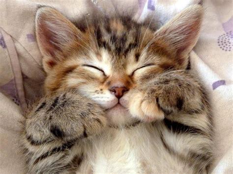Cutest Cats Pet Pet Pet Product 8 by Quot Soft Warm Of Fur Warm