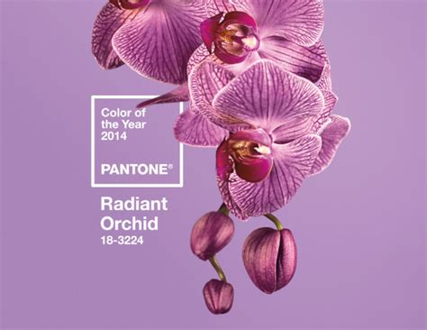 radiant orchid home decor 5 big home decor trends for 2014