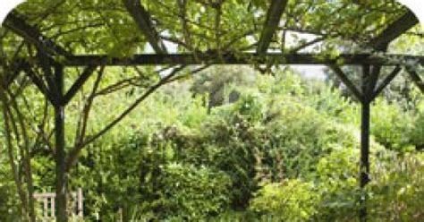Support Plante Grimpante Bambou by Palisser Une Plante Grimpante Pour Habiller Un Mur Ou Une