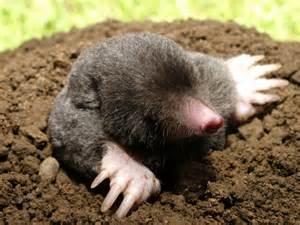Are Moles Blind Biozid Portal Maulwurf Europ 228 Ischer
