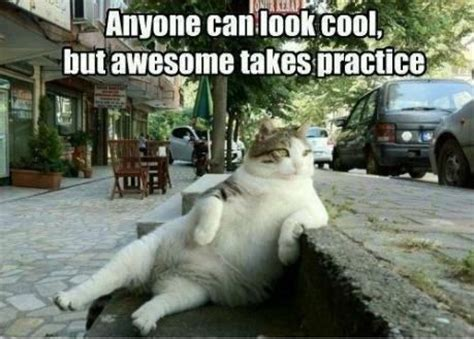Cool Cat Meme - anyone can look cool cat meme cat planet cat planet