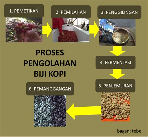 Biji Kopi Lung diagram pengolahan kopi image collections how to guide and refrence