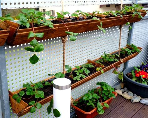 Hanging Strawberry Planter Diy by Grow Vertical Strawberry Garden In 10 Diy Ways