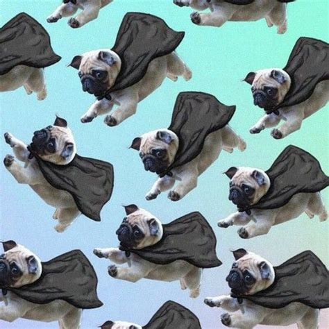 flying pug 17 best images about pugs 11111oneoneone pug and wallpapers
