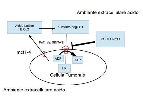 alimentazione acida la cellula tumorale funziona come una batteria acida