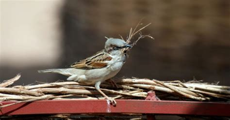 how to keep birds from building nests in gutters ehow uk