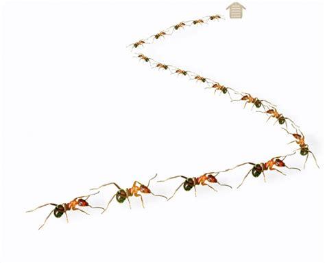 formiche in casa come eliminarle formiche in casa come eliminarle unadonna
