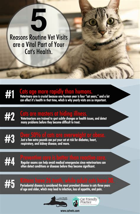 national bring your cat to the vet day aug 22