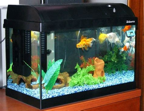 acquario per casa accessori acquario marino accessori per acquario