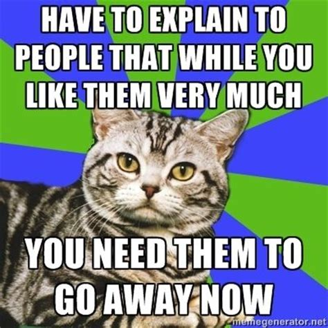 Introvert Meme - introvert cat lmao was thinking the same thing
