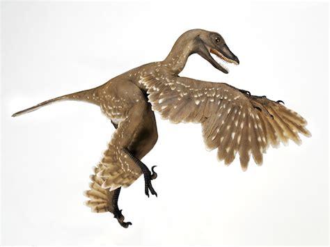 dinosauro volante dinosaur feathers