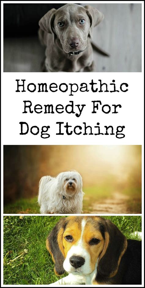 pruritus in dogs best 25 stop itching ideas on