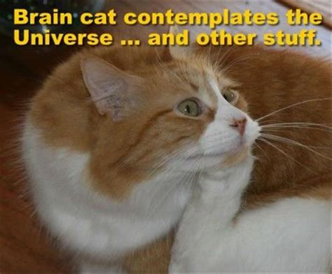 Thinking Cat Meme - attack of the funny animals 21 pics