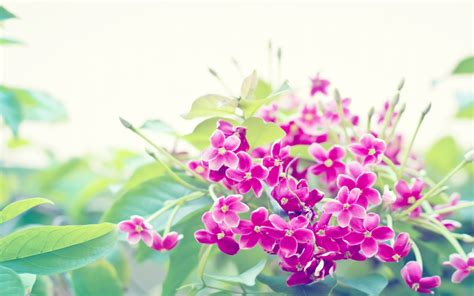 flower image flowers images flowers hd wallpaper and background photos
