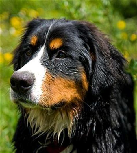 black and brown dogs brown small breeds quotes