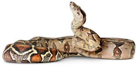 film ular raksasa inilah 7 ular terbesar di dunia dan foto penangkapannya