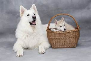 Dogs For Sale In Why Find Dogs For Sale If You Can Adopt Dogalize