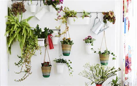 piante acquatiche da appartamento sei idee semplici per coltivare in casa