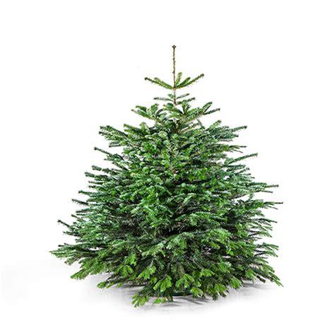 bilder zu weihnachtsbaum 28 images weihnachtsbaum schm
