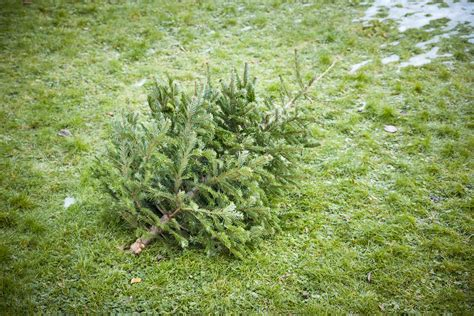 waste management christmas trees top 28 waste management tree wm waste management tree fail