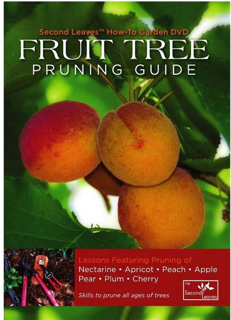 when to prune fruit trees 1000 ideas about prune fruit on pruning fruit