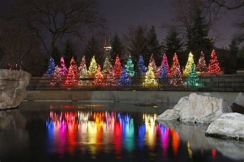 christmas lights in the city of logan brighten up zoolights is back