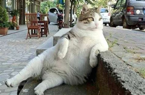 Famous Fat Cat Who Inspired Meme Honored With Statue