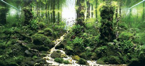 Aquascape Wood 画像アリ 世界水草レイアウトコンテスト2012 の受賞作品がどれも美しすぎてつらい ねとらぼ