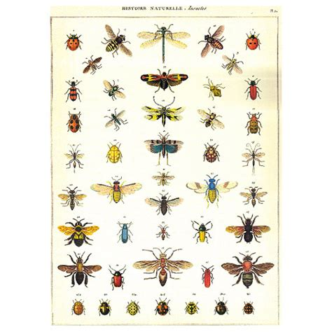 History Of Decoupage - decoupage paper insects history of nature history of bugs