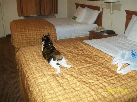 cat on the bed she felt right at home picture of la