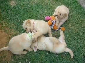 hair suruba animals cute dogs puppies suruba fofinha image