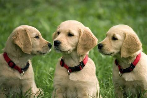 three puppies sacha squair of three wine uncork ontario