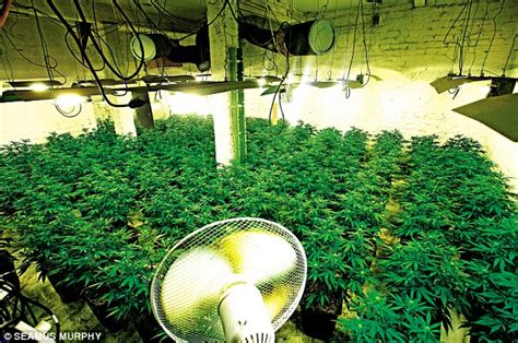Outside Home Design Online by Cannabis Factories How Criminal Gangs Are Turning Our