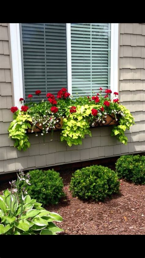 window boxes best 25 window box flowers ideas on