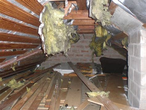 Marder Unter Dem Dach 4804 by Den Marder Auf Dem Dachboden Wieder Loswerden Bauen De