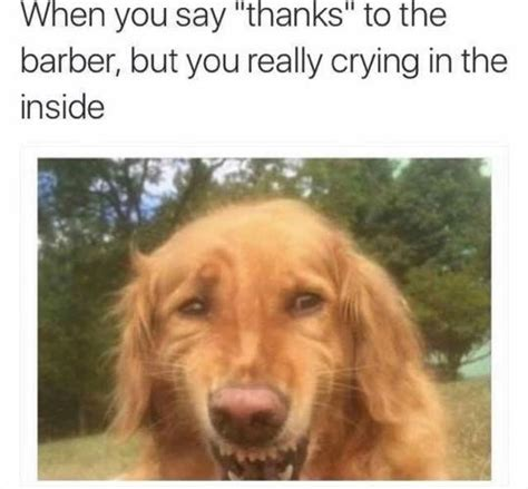 Crying Dog Meme - every goddamn time image 3851759 by winterkiss on favim com