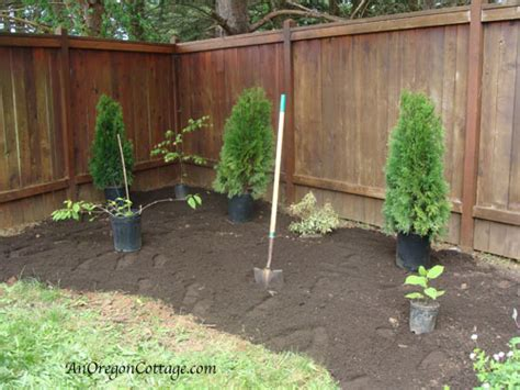 How To Plant A Flower Bed by 8 Easy Steps To A New Shrub And Flower Bed