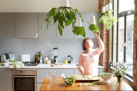 Indoor Hanging Herb Planter by 15 Phenomenal Indoor Herb Gardens