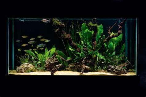 design aquascape simple how to set up a simple but stunning planted tank